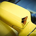 Butterfly on sports car mirror Poster by Elena Elisseeva