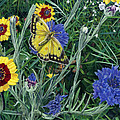 Butterfly Wildflowers spring time garden floral oil painting green yellow Print by Walt Curlee