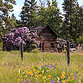 Cabin and Wildflowers Print by Athena Mckinzie