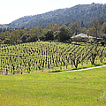 California Vineyards In Late Winter Just Before The Bloom 5D22073 Print by Wingsdomain Art and Photography