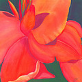 Canna Lily Poster by Debbra Nodwell-Bender