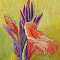 Canna Lily Poster by Janet Ashworth