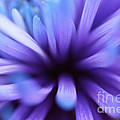 Captivation Print by Inspired Nature Photography By Shelley Myke