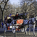 Carriage Driver - Central Park - NYC Print by Madeline Ellis
