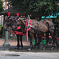 Carriage Horses at City Market Poster by Linda Ryan