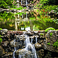 Cascading waterfall and pond Print by Elena Elisseeva