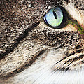 Cat Art - Looking For You Print by Sharon Cummings