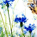 Cat in the cornflowers Print by Paul Lovering