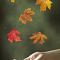 Catching Leaves Poster by Amanda And Christopher Elwell
