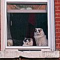 Cats on a Sill Print by Randi Shenkman