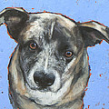 Cattle Dog Poster by Mary Medrano