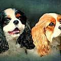 Cavalier King Charles Print by Diana Angstadt