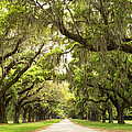 Charleston Avenue of Oaks Poster by Stephanie McDowell