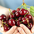 Cherries Print by Elena Elisseeva