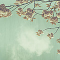 Cherry Blossom in Fulwood Park Print by Nomad Art And  Design