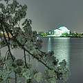 Cherry Blossoms 2013 - 102 Print by Metro DC Photography
