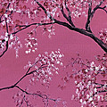 Cherry Blossoms  Print by Darice Machel McGuire