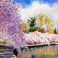 Cherry Blossoms Print by Shirley Braithwaite Hunt