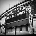 Chicago Cubs Wrigley Field Sign in Black and White Poster by Paul Velgos