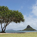 Chinamans Hat With Tree - Oahu Hawaii Print by Brian Harig