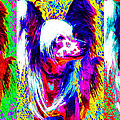 Chinese Crested Dog Three 20130125 Print by Wingsdomain Art and Photography