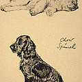 Chow And Spaniel, 1930, Illustrations Poster by Cecil Charles Windsor Aldin