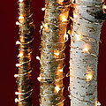 Christmas lights on birch branches Poster by Elena Elisseeva