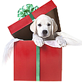 Christmas Puppy Print by Diane Diederich