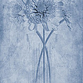 Chrysanthemum Cyanotype Poster by John Edwards