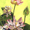 Citron Lotus 1 Print by Debbie DeWitt