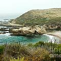 Cliffs Over Montana de Oro California Poster by Artist and Photographer Laura Wrede