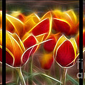Cluisiana Tulips Triptych  Poster by Peter Piatt