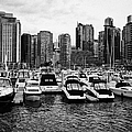 coal harbour marina and high rise apartment condo blocks in the west end Vancouver BC Canada Print by Joe Fox