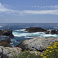 Coastline and Flowers in California's Point Lobos State Natural Reserve Print by Bruce Gourley