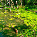 Colbert Creek along Rock Spring Trail on Natchez Trace Parkway-AL Print by Ruth Hager