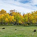 Colorado Fall Panorama Print by Baywest Imaging