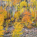 Colorful Autumn Forest In The Canyon of Cottonwood Pass Print by James BO  Insogna