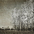 Colorless Fall Poster by Jeff Swanson