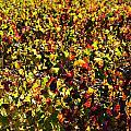 Colors of Autum.... Print by Werner Lehmann