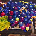 Concord Grapes on a Step Print by Sarah Luginbill