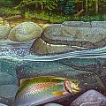 Coolwaters Rainbow Trout Poster by Jon Q Wright