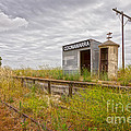 Coonawarra Station South Australia Print by Colin and Linda McKie