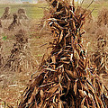 Corn Stalk Bales Poster by Marcia Colelli