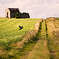 Country Lane Poster by Christopher and Amanda Elwell
