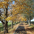 Country Lane Print by Roger Potts