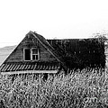 Cow House Black And White Poster by Monica Withers
