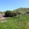 Cows Along The Rolling Landscapes of The Black Diamond Mines in Antioch California 5D22291 Poster by Wingsdomain Art and Photography