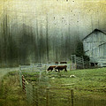 Cows By The Road Print by Kathy Jennings