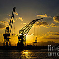 Cranes in the sunset Poster by David Hill