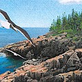 Crusing Otter Point Print by Brent Ander